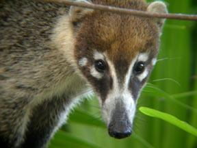 Wildlife Of The Costa Maya And Sian Ka An