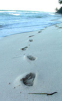 Secluded beach footprints