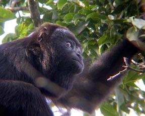 Wildlife of the costa Maya and Sian Ka'an