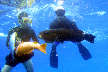 Spear Fishing Costa Maya - Free-Diving