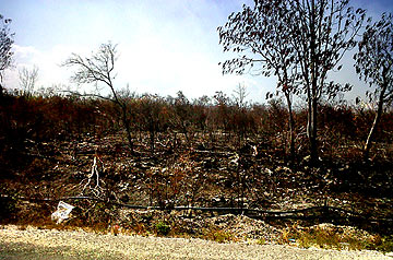 Mahahual Fire damage