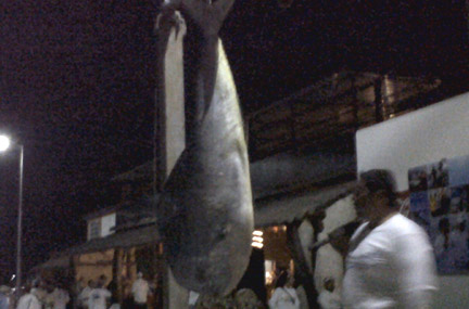 mahahual fishing tournament